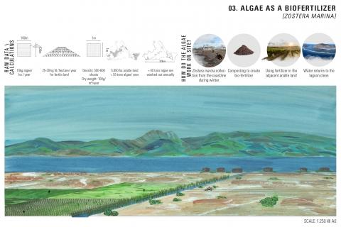 Site's scale