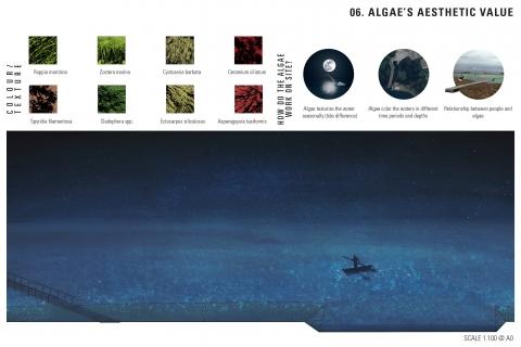 algae's scale